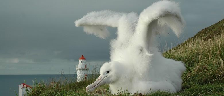 Albatross Express! Science Festival Special