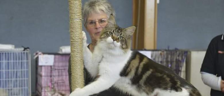 Canterbury Allbreeds Cat Club 6 Ring Extravaganza Christchurch Eventfinda