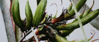 Botanical Art Worldwide: Ngāi Tipu Taketake Indigenous Flora
