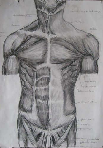 Drawing Salon - Life Drawing Course With Anatomy - Dunedin - Eventfinda