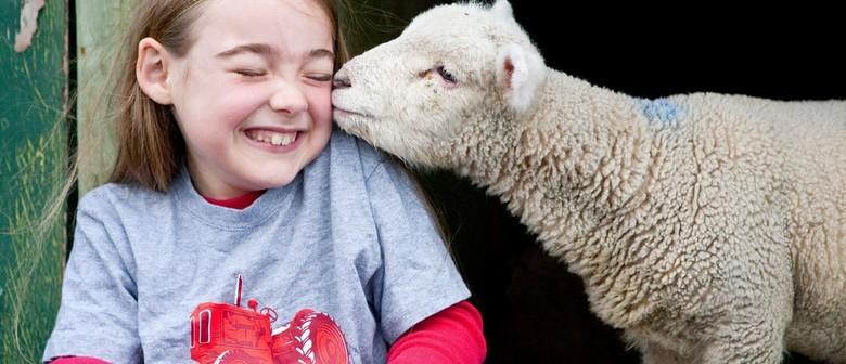 Pauatahanui School Lamb & Calf Day