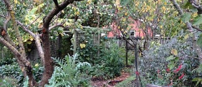 07 What's Grown in Backyards of Lyttelton