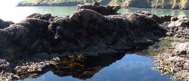11 Shore Platform Scamper – Camp Bay/Te Pohue