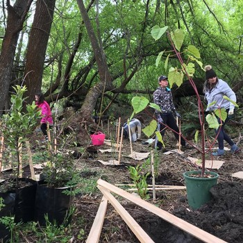 Community Native Planting Day - Lake Hayes South Shore