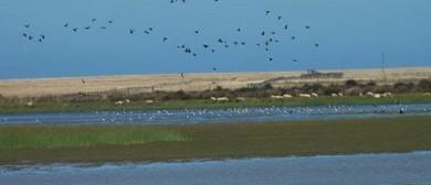20 Wildlife Watch on Kaitorete Spit