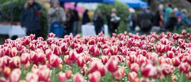 Tulip Sunday