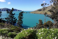 Image for event: 17 Changing Vegetation of Diamond Harbour