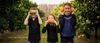 Great Annual Grapefruit A'Peel