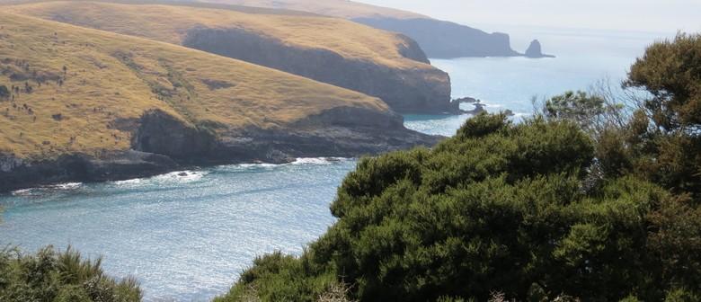 06 Ecology and Volcanology of Stony Bay