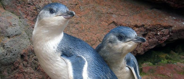 Pohatu Penguin Nature Tour