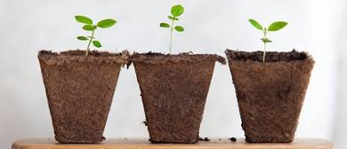 Sustainability Market