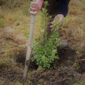 Conservation Week - Habitat Restoration Planting