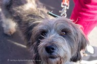 Image for event: Ladies Social Photography Adventure - Fur Baby Photography