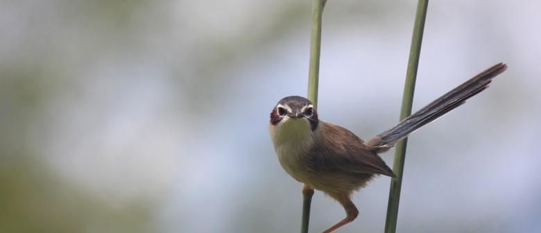 Kristal Cain - Assumptions About Birds