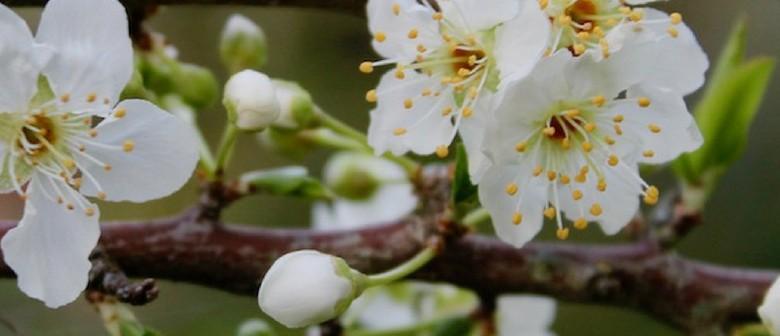 Spring Freshness Menu