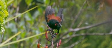 Rotoroa Island Volunteer Day: Celebrate Conservation Week