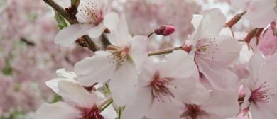 Cherry Blossom Festival 2018