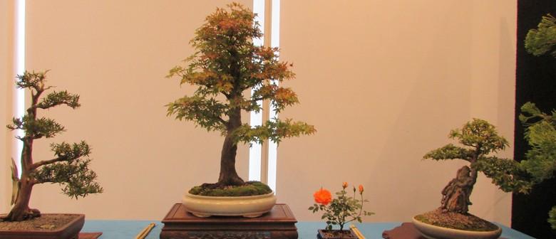 50th Anniversary Bonsai Show