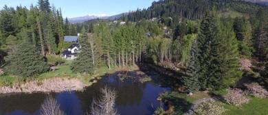 Restoring Hanmer Springs - Towards a Predator Free Hanmer