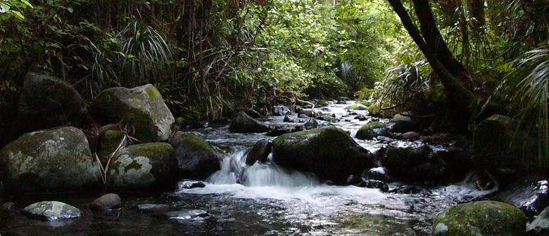 Mangakaraa Nature Track: Guided Walk