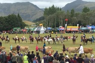 Image for event: Golden Bay A&P Show