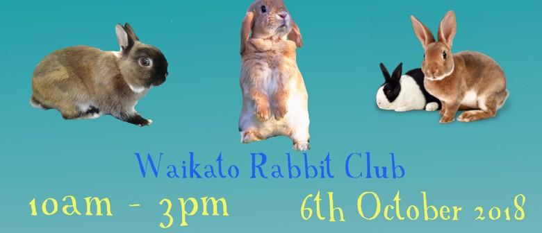Waikato Rabbit Club Show