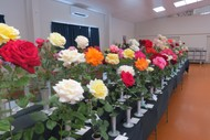 Image for event: Manawatu Spring Rose Show