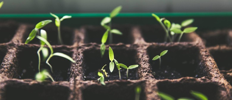Workshop: How to Grow From Seeds
