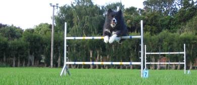 Feilding Dog Training Club - Games Day