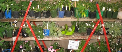 Plants for Parafed Taranaki Fundraiser