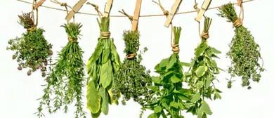 Herbal Harvesting Workshop
