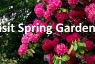 Image for event: Dunedin Open Gardens Festival