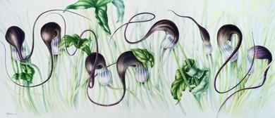 Botanical Art Exhibition - Sue Wickison