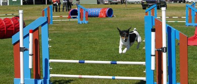 Blenheim Canine Training Club Agility/Jumpers Champ Show