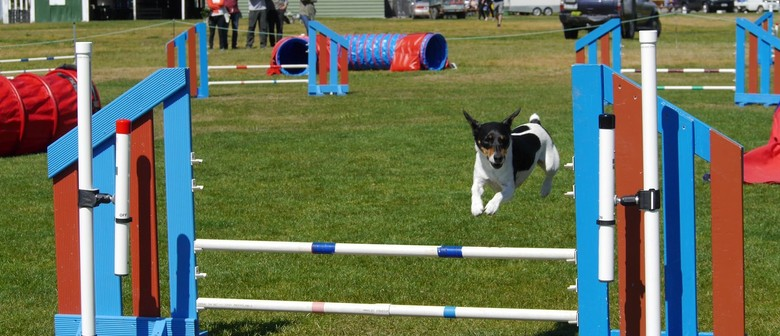 Blenheim Canine Training Club Agility/Jumpers Champ Show