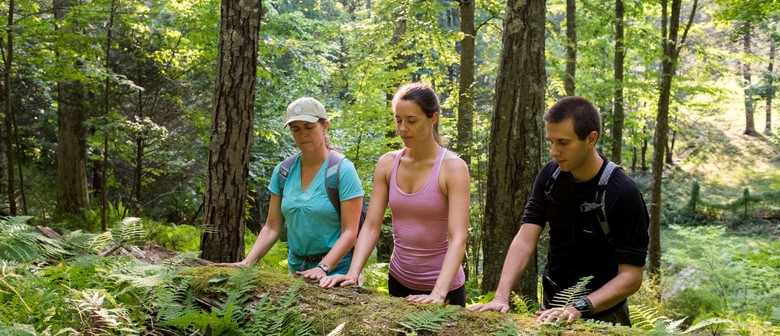 Image result for Forest bathing