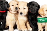 Image for event: Pick of the Litter