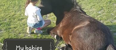 Pony / Horse Rides