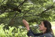 Image for event: Forest & Bird Public Talk - Kea Talk