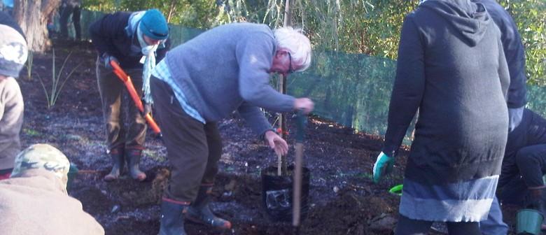 Armistice Day 100 Year Commemoration - Tree Planting