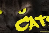 Image for event: Cats