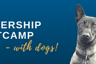 Image for event: Leadership Training Bootcamp - with Dogs!
