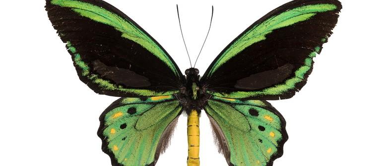 Secret World of Butterflies