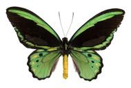 Image for event: Secret World of Butterflies