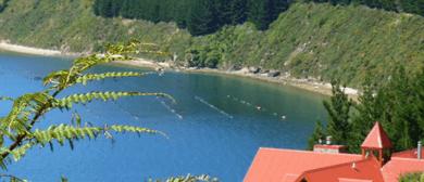 Marlborough Sounds Day Excursion: Boat, Hike, Eat!
