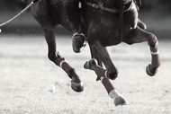 Image for event: Queenstown Polo - Silver Cup
