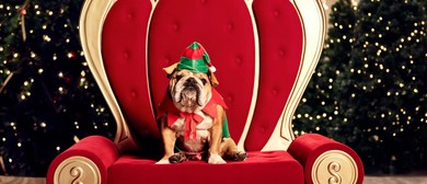 Pet Photography With Santa