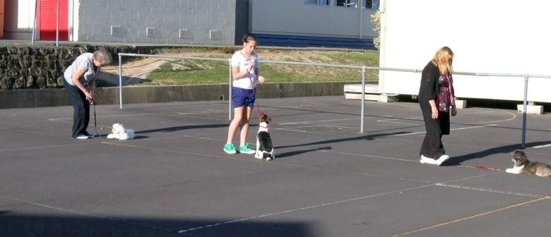 Dog Walking Certificate Course