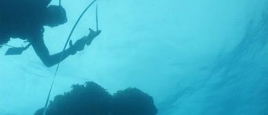 Citizen Science - GIRT Scientific Divers
