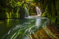 Image for event: Kaimai Waterfall Workshop